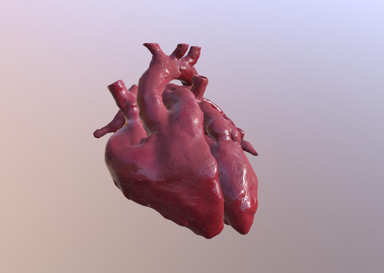 Veduta dei due ventricoli del cuore 3D
