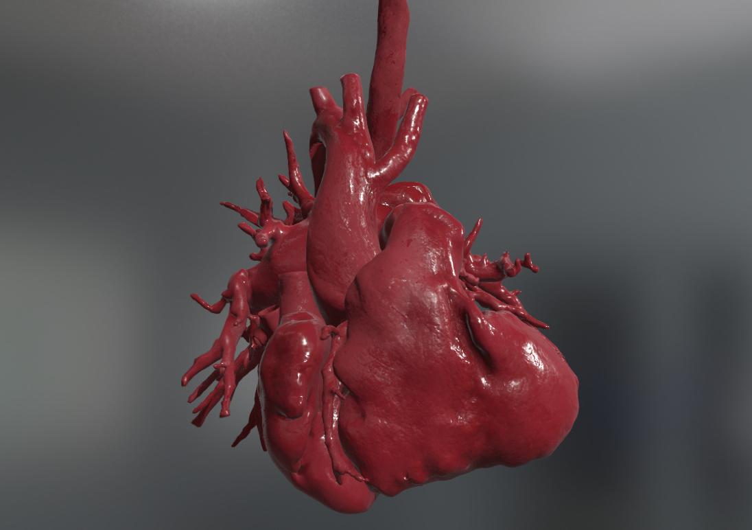 Modello cuore 3D su sfondo grigio