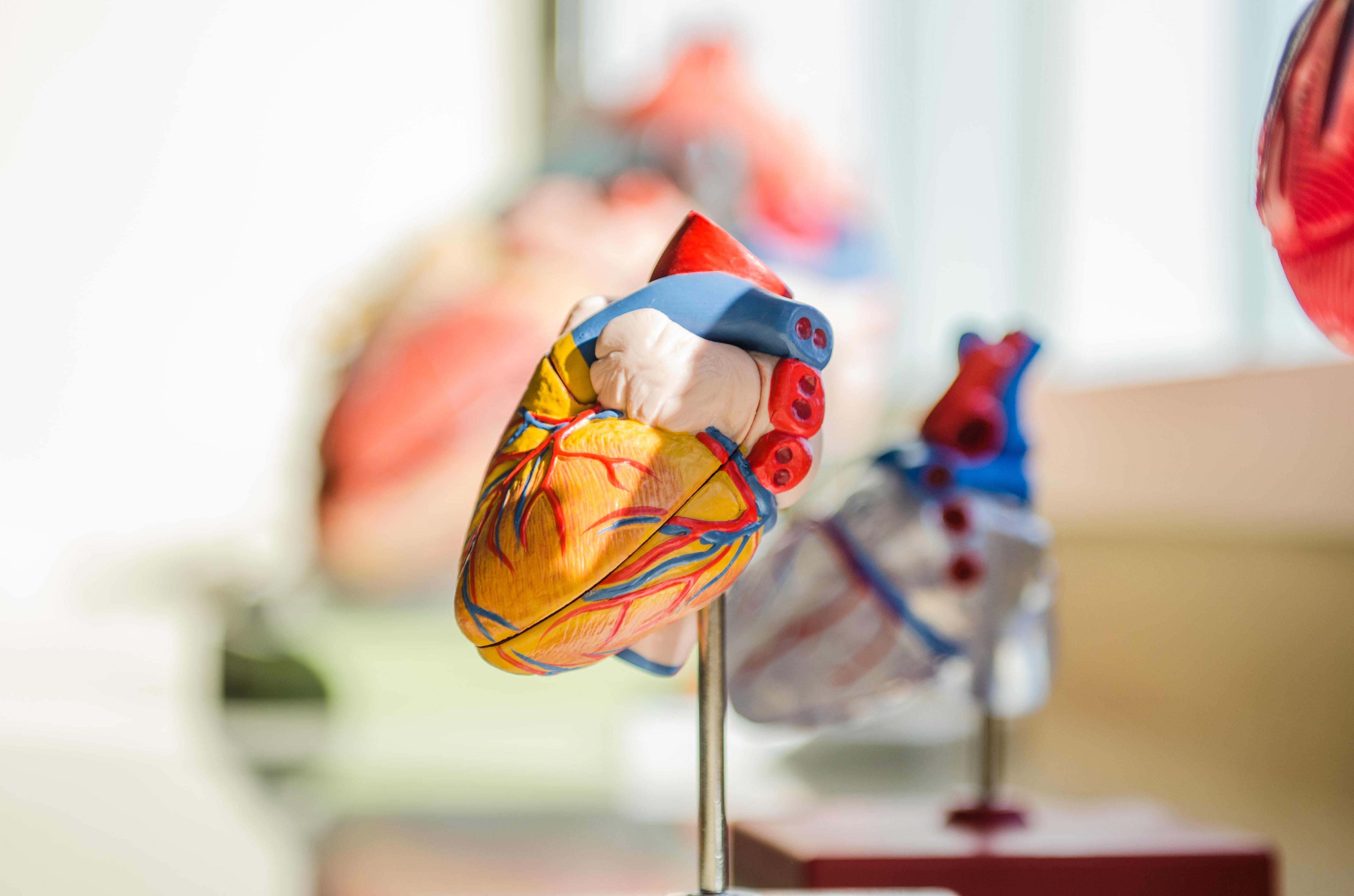 Foto modello di cuore